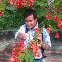 dipranjan14815's photo