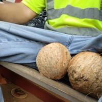 Coconutz's photo