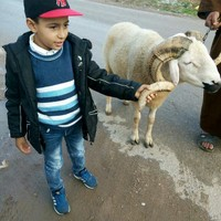 moussaarli's photo