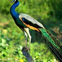 bouaraguia's photo