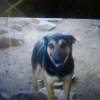 G Dog's photo