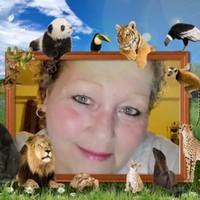 lioness62's photo