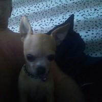 Blueboy's photo